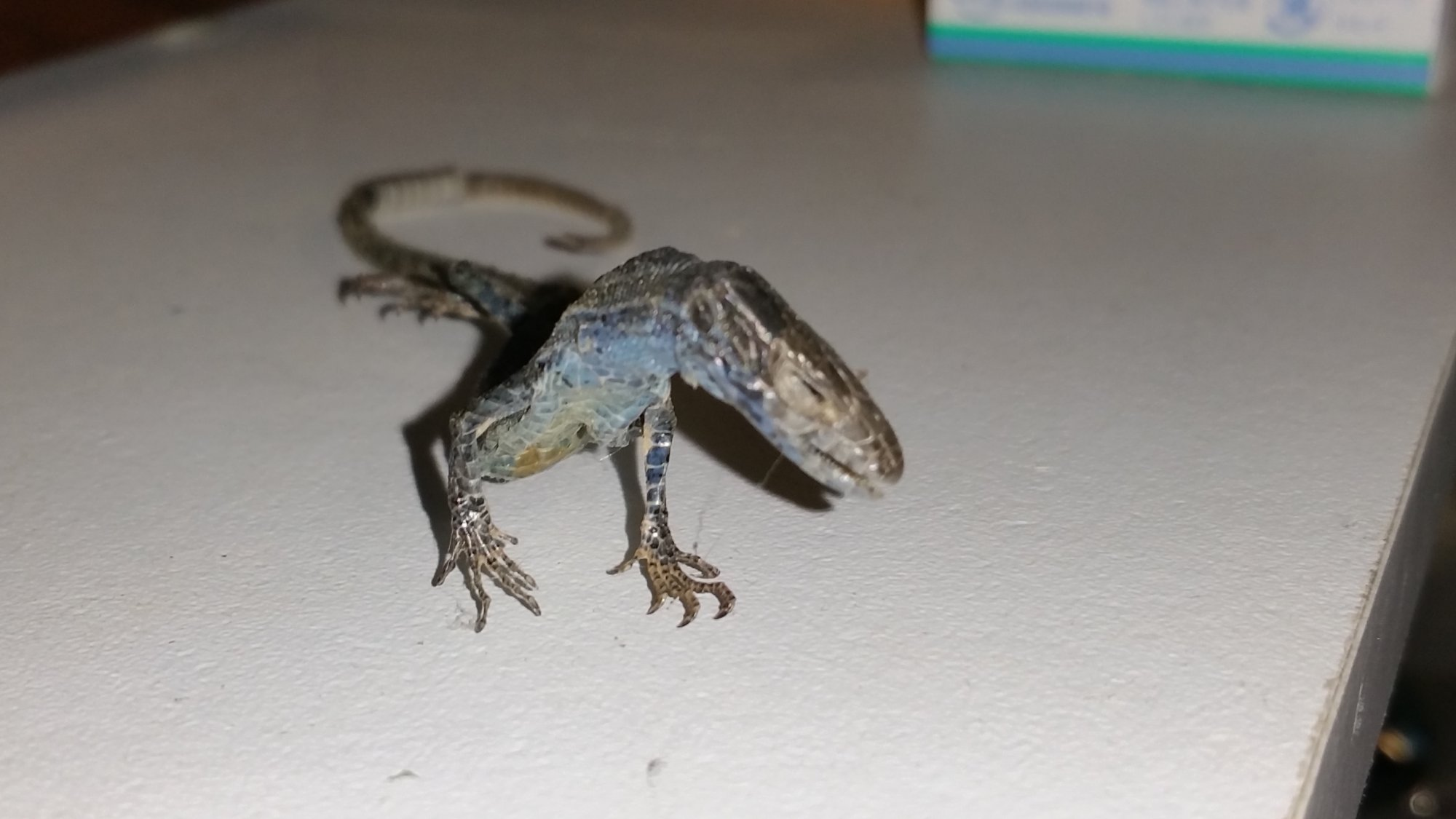 Dried Lizard Dismantle It